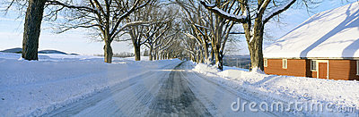 Maple Trees in Snow,