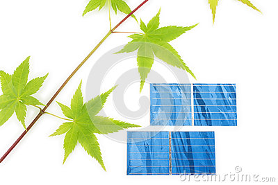 Maple twig and solar cells