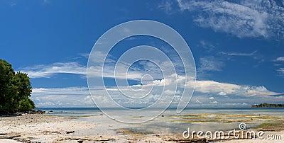 Mar polinésio tropical Crystal Water Borneo Indonesia do oceano do Palm Beach do paraíso de turquesa