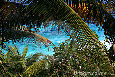 Mar tropical, palmeiras, costa.