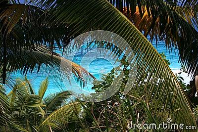 Mar tropical, palmeras, costa.