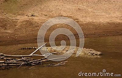 Mara croc