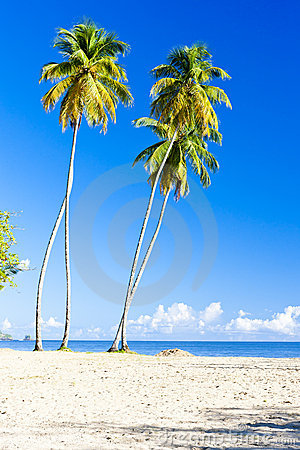 Maracas Bay Stock Photo
