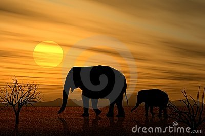 March of The Elephants At Sunset
