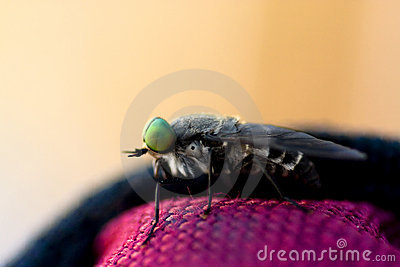 March Fly