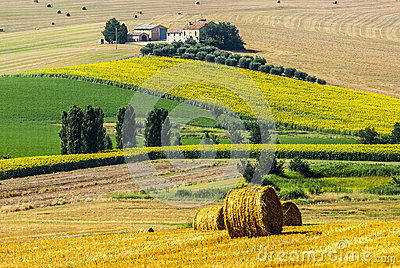 Marches (Italy) - Farm