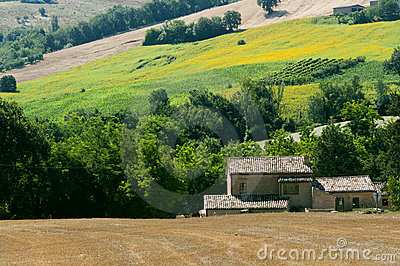 Marches (Italy) - Landscape at summer