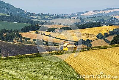 Marches Landscape