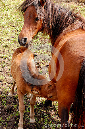 Free Mare And Colt Stock Images - 25779414