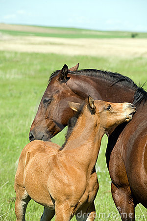 Free Mare And Foal Stock Photo - 5533780