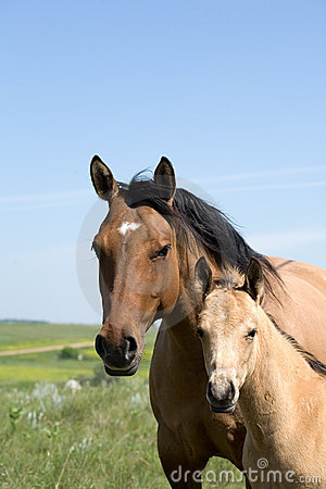 Free Mare And Foal Stock Photography - 5605272