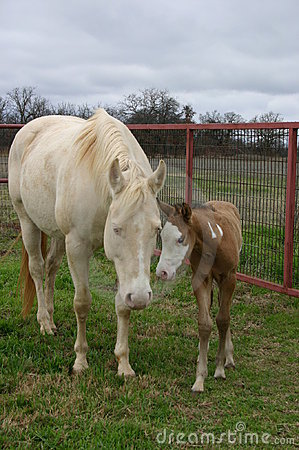 Free Mare And Foal Royalty Free Stock Photo - 79595