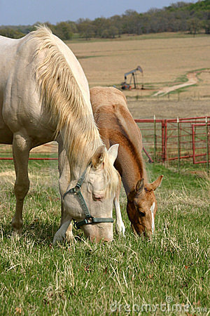 Free Mare And Foal Grazing Royalty Free Stock Image - 645816