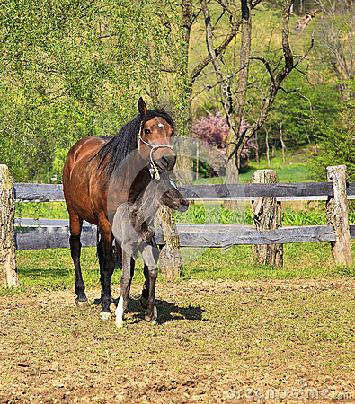 Free Mare And Her Colt Royalty Free Stock Images - 30110519
