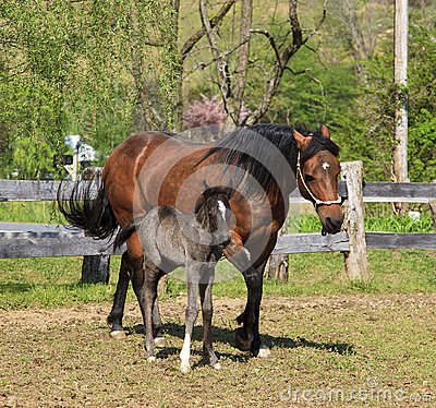 Free Mare And Her Colt Royalty Free Stock Image - 30111076