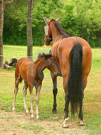 Mare and Colt 2