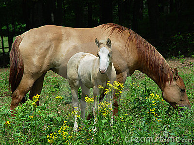 Mare and colt in pasture