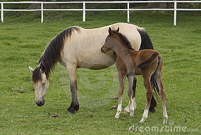 Mare and filly horse