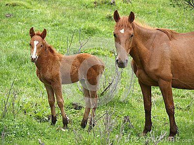 Mare and the foal