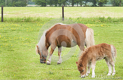 Mare with foal grazing