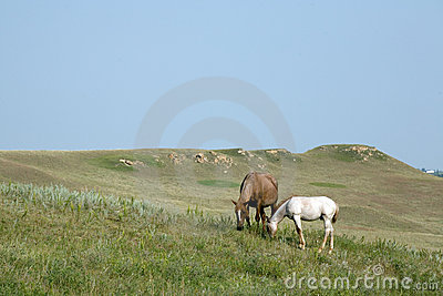 Mare and Foal Quarter Horse