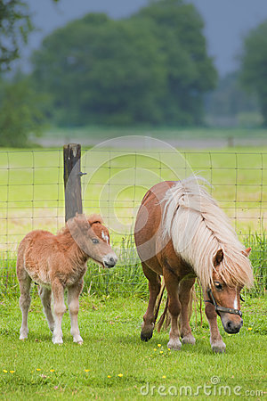 Mare with foal standing in a meadow