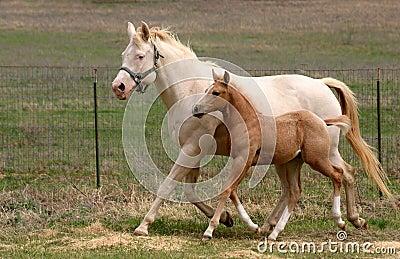 Mare & Foal Trotting