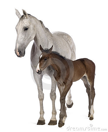 Mare and her foal, standing