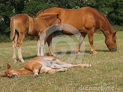Mare with Sleeping Foal