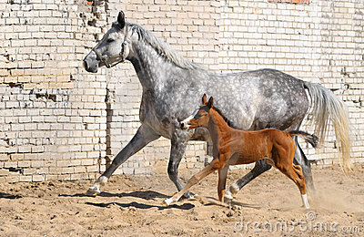Mare and small foal