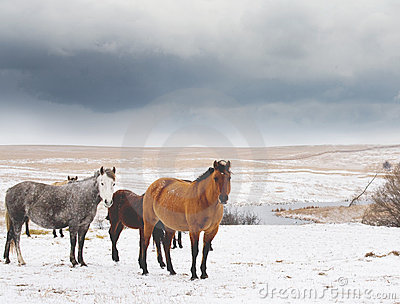 Mares In Snow