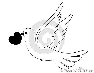 Mariage de colombe