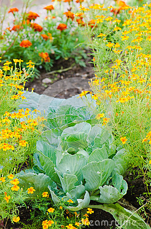Marigold flowers and other herbs