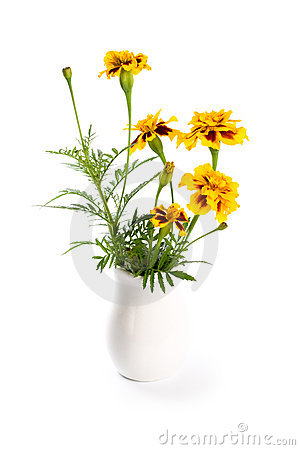 Marigold flowers in vase