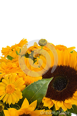 Marigold and sunflowers