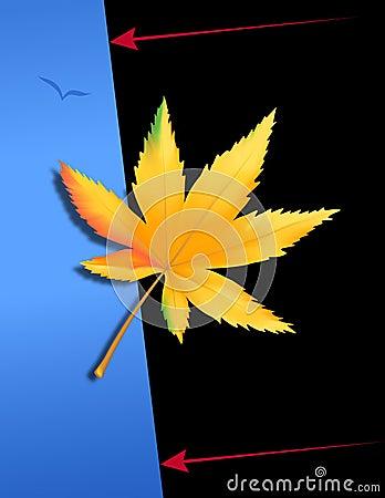 Marihuana liść