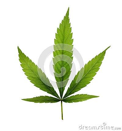 Free Marijuana Royalty Free Stock Images - 11983879