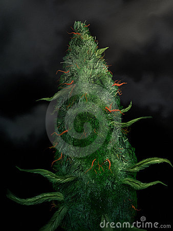 Marijuana Bud - Digital Painting