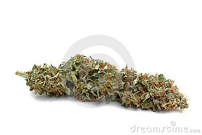 Marijuana ( Cannabis ) bud up close and isolated
