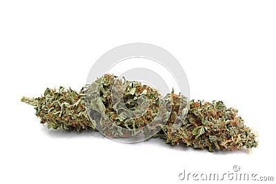 Marijuana ( Cannabis ) bud up close and isolated