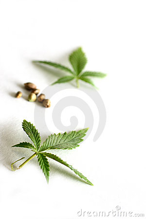 Marijuana Leaves and Seeds