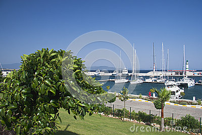 Marina with yachts and boats