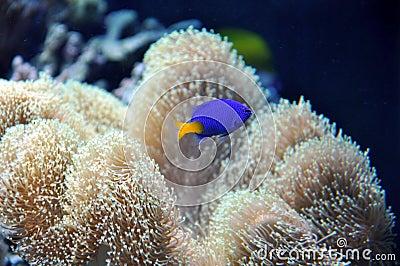 Marine Aquarium with a blue fish