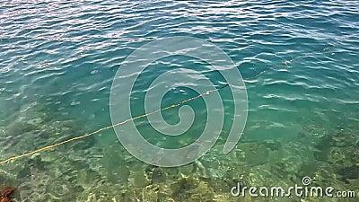 Marine background stock video