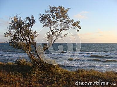 Marine coast