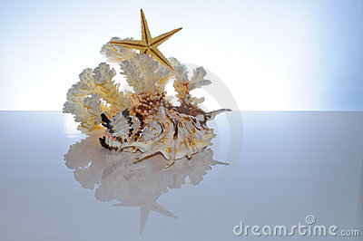 Marine coral and shells Stock Photo