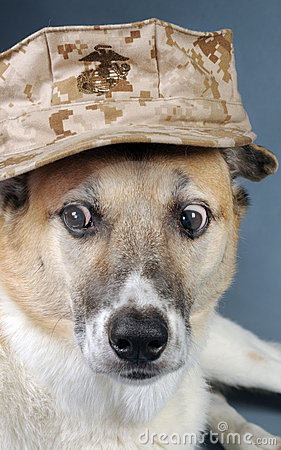 Marine Corp Dog.