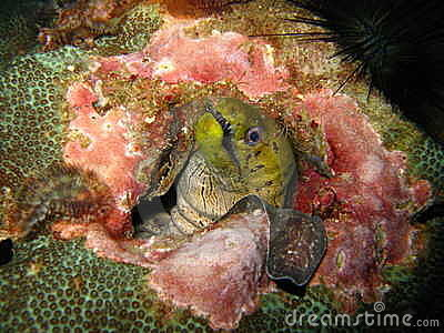 Marine creature in coral reef