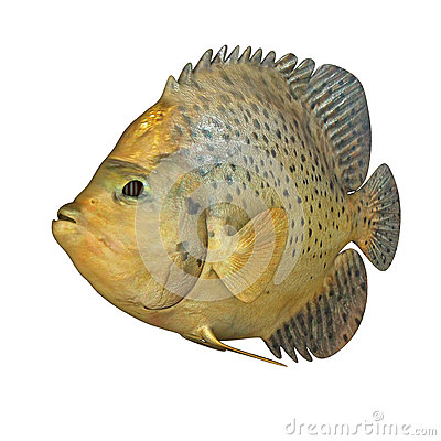 Marine Fish Stock Illustration - Image: 48762746