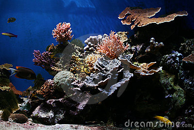 Marine Fish - Tropical Coral Reef